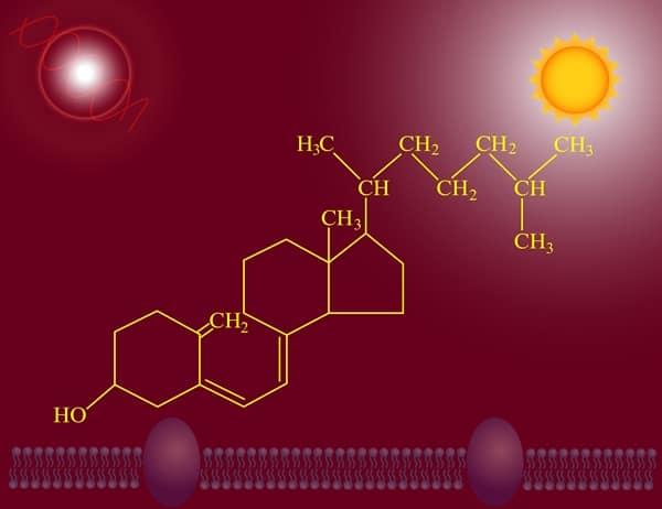 Vitamin D3 Herstellung Synthese D2 vegan vegetarisch pflanzlich tierisch Lanolin Wolle Flechten