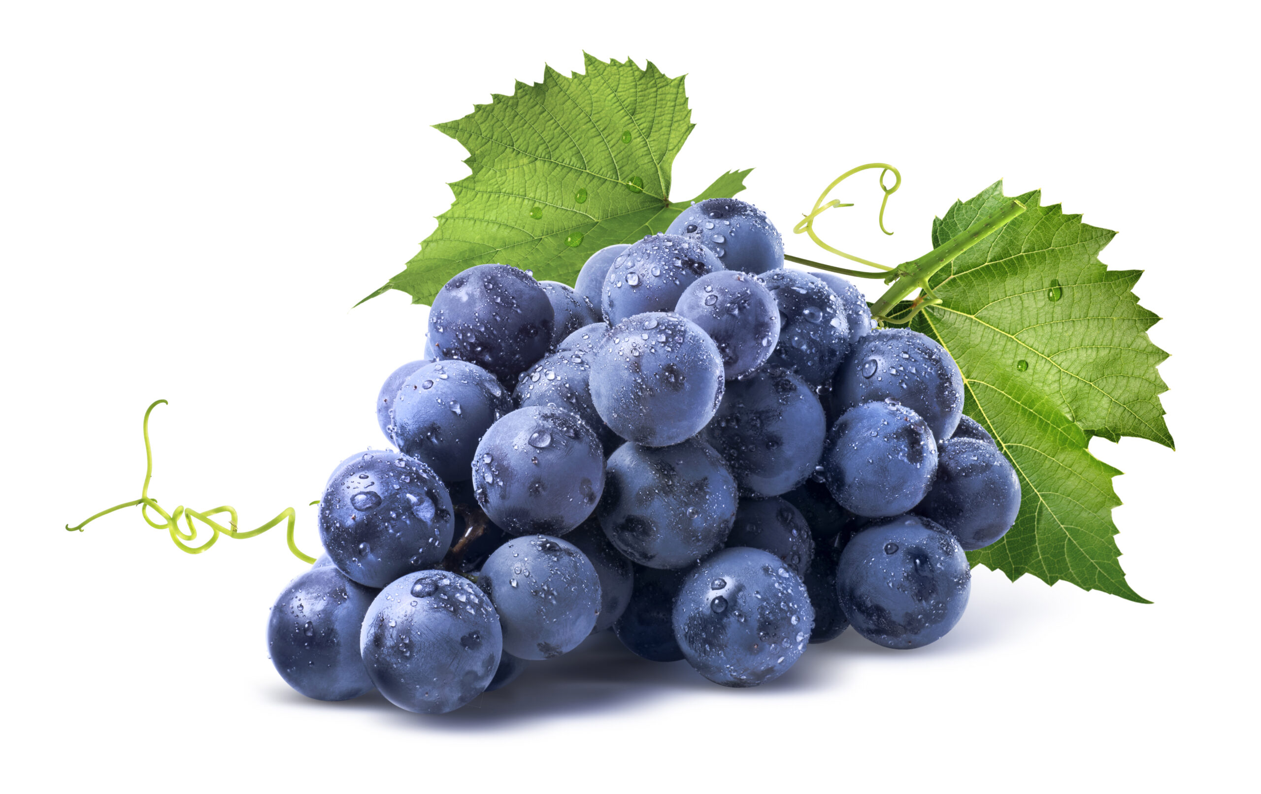Mount Natural OPC PURE Antioxidant Alles über OPC Wissenswertes über OPC