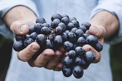 Europäische Weintrauben