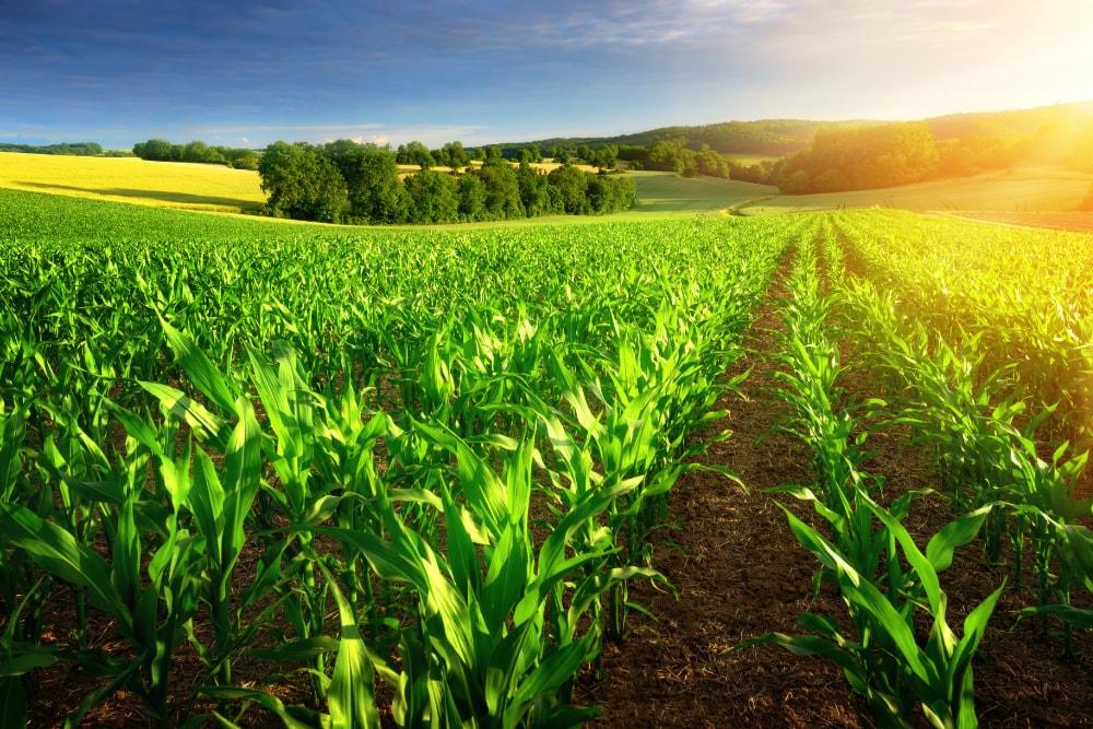 Bio Produkte gesünder?