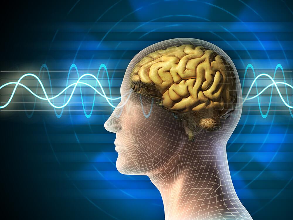 Auswirkung Cholin auf das Gehirn